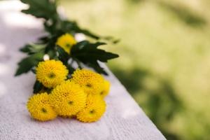 Chrysanthemum-Santini-saisonkalender-blumen-zinnowitz-rosen-und-dornen