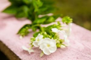 blumenladen-zinnowitz-usedom-florist-17