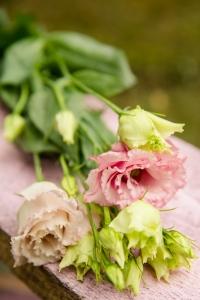 blumenladen-zinnowitz-usedom-florist-18
