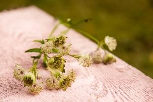 blumenladen-zinnowitz-usedom-florist-5