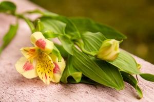 blumenladen-zinnowitz-usedom-florist-6