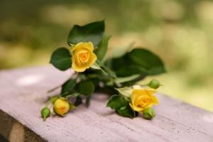 Blumenladen-Zinnowitz-Strauß-Rose-und-Dornen-5