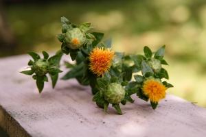 Blumenladen-Zinnowitz-Strauß-Rose-und-Dornen-7