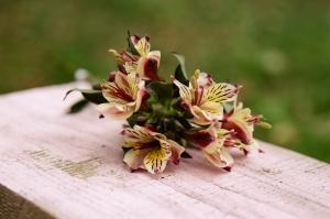Blumen-Zinnowitz-Florist-Rosen und Dornen-Inkalilie-lilie-rot-gelb-orange