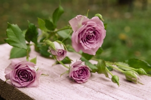 Blumen-Zinnowitz-Florist-Rosen und Dornen-verzweigte-Rosen-rosa-zart