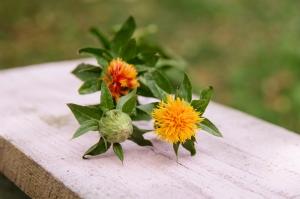 Blumen-Zinnowitz-Florist-Rosen und Dornen-zart-September-Blüte-Carthamus-Färberdiestel-orange
