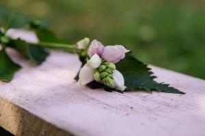 Blumen-Zinnowitz-Florist-Rosen und Dornen-zart-September-Blüte-Cheleone-rosa