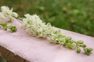 Blumen-Zinnowitz-Florist-Rosen und Dornen-zart-September-weiß-kleine-Blüten-Rittersporn