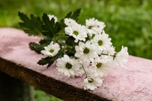 Blumen-Zinnowitz-Florist-Rosen und Dornen-zart-Oktober-Blüte-blumenstrauß-rose-lilie-Hagebutte-barthnelke-kohl-chrysantheme-Asclepia-sedum-laub-Johanniskraut-Zierobst-5