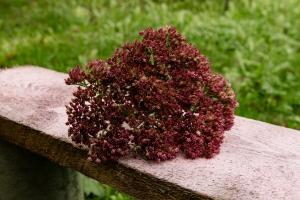 Blumen-Zinnowitz-Florist-Rosen und Dornen-zart-Oktober-Blüte-blumenstrauß-rose-lilie-Hagebutte-barthnelke-kohl-chrysantheme-Asclepia-sedum-laub-Johanniskraut-Zierobst-8
