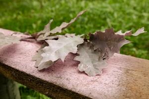 Blumen-Zinnowitz-Florist-Rosen und Dornen-zart-Oktober-Blüte-blumenstrauß-rose-lilie-Hagebutte-barthnelke-kohl-chrysantheme-Asclepia-sedum-laub-Johanniskraut-Zierobst-9