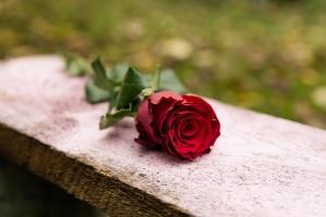 Blumen-Zinnowitz-Florist-Rosen und Dornen-zart-November-Blüte-blumenstrauß-rose-lilie-chrysantheme-laub-Schleierkraut-Gerbera-Calla-Eustomia-Veronica-Ehrenpreis-Nelke-Ornithogalum-Amaryllis-Euca-3