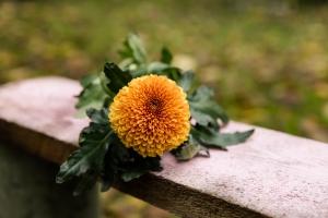 Blumen-Zinnowitz-Florist-Rosen und Dornen-zart-November-Blüte-blumenstrauß-rose-lilie-chrysantheme-laub-Schleierkraut-Gerbera-Calla-Eustomia-Veronica-Ehrenpreis-Nelke-Ornithogalum-Amaryllis-Euca-12