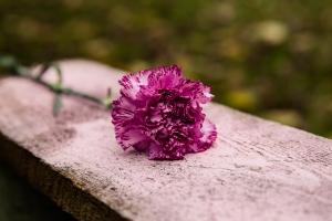 Blumen-Zinnowitz-Florist-Rosen und Dornen-zart-November-Blüte-blumenstrauß-rose-lilie-chrysantheme-laub-Schleierkraut-Gerbera-Calla-Eustomia-Veronica-Ehrenpreis-Nelke-Ornithogalum-Amaryllis-Euca-13
