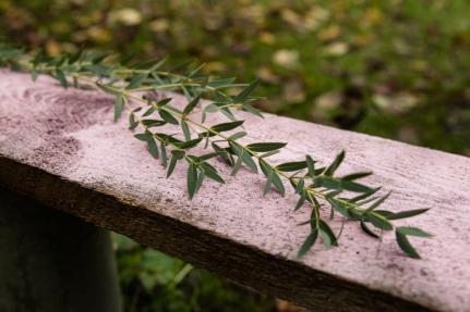 Blumen-Zinnowitz-Florist-Rosen und Dornen-zart-November-Blüte-blumenstrauß-rose-lilie-chrysantheme-laub-Schleierkraut-Gerbera-Calla-Eustomia-Veronica-Ehrenpreis-Nelke-Ornithogalum-Amaryllis-Euca-17