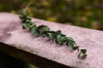 Blumen-Zinnowitz-Florist-Rosen und Dornen-zart-November-Blüte-blumenstrauß-rose-lilie-chrysantheme-laub-Schleierkraut-Gerbera-Calla-Eustomia-Veronica-Ehrenpreis-Nelke-Ornithogalum-Amaryllis-Euca-20