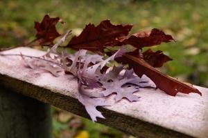 Blumen-Zinnowitz-Florist-Rosen und Dornen-zart-November-Blüte-blumenstrauß-rose-lilie-chrysantheme-laub-Schleierkraut-Gerbera-Calla-Eustomia-Veronica-Ehrenpreis-Nelke-Ornithogalum-Amaryllis-Euca-6