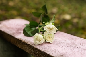 Blumen-Zinnowitz-Florist-Rosen und Dornen-zart-November-Blüte-blumenstrauß-rose-lilie-chrysantheme-laub-Schleierkraut-Gerbera-Calla-Eustomia-Veronica-Ehrenpreis-Nelke-Ornithogalum-Amaryllis-Euca-11