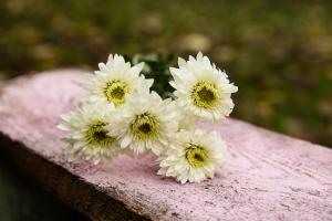 Blumen-Zinnowitz-Florist-Rosen und Dornen-zart-November-Blüte-blumenstrauß-rose-lilie-chrysantheme-laub-Schleierkraut-Gerbera-Calla-Eustomia-Veronica-Ehrenpreis-Nelke-Ornithogalum-Amaryllis-Euca-2