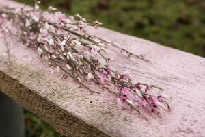 Blumenladen-Zinnowitz-Florist-Rosen-und-Dornen-Chrysantheme-tulpe-nelke-kamille-lilie-rosen-gerbera-ginster-lilie-11