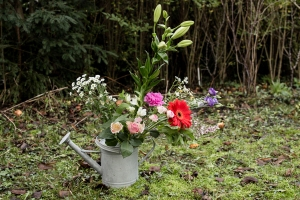 Blumenladen-Zinnowitz-Florist-Rosen-und-Dornen-Chrysantheme-tulpe-nelke-kamille-lilie-rosen-gerbera-ginster-lilie-13