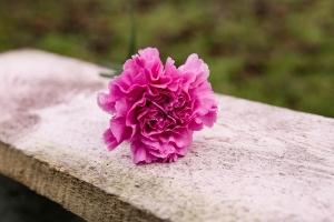 Blumenladen-Zinnowitz-Florist-Rosen-und-Dornen-Chrysantheme-tulpe-nelke-kamille-lilie-rosen-gerbera-ginster-lilie-3