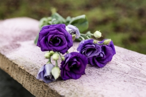 Blumenladen-Zinnowitz-Florist-Rosen-und-Dornen-Chrysantheme-tulpe-nelke-kamille-lilie-rosen-gerbera-ginster-lilie-5