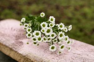 Blumenladen-Zinnowitz-Florist-Rosen-und-Dornen-Chrysantheme-tulpe-nelke-kamille-lilie-rosen-gerbera-ginster-lilie