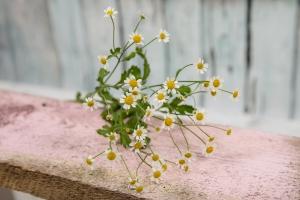 Blumenladen-Zinnowitz-Rosen-und-Dornen-Florist-Strauß-Ranunkel-Gerbera-Chemeone-Kamille-Hiazinthe-Ginster-Tulpe-Eustoma-Fresie-Solidago-hübsche-Blumen-einzeln-4
