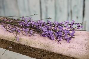 Blumenladen-Zinnowitz-Rosen-und-Dornen-Florist-Strauß-Ranunkel-Gerbera-Chemeone-Kamille-Hiazinthe-Ginster-Tulpe-Eustoma-Fresie-Solidago-hübsche-Blumen-einzeln-5