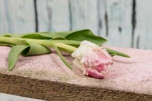 Blumenladen-Zinnowitz-Rosen-und-Dornen-Florist-Strauß-Ranunkel-Gerbera-Chemeone-Kamille-Hiazinthe-Ginster-Tulpe-Eustoma-Fresie-Solidago-hübsche-Blumen-einzeln-6