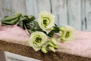 Blumenladen-Zinnowitz-Rosen-und-Dornen-Florist-Strauß-Ranunkel-Gerbera-Chemeone-Kamille-Hiazinthe-Ginster-Tulpe-Eustoma-Fresie-Solidago-hübsche-Blumen-einzeln-7