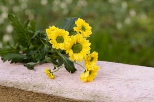 Rosen-und-Dornen-florist-blumenladen-Zinnowitz-Usedom-Chysantheme-narzisse-Tulpe-ranunkel-christrose-Nelke-flieder-annemone-rose-solidago-11