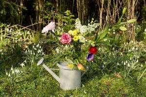 Rosen-und-Dornen-florist-blumenladen-Zinnowitz-Usedom-Chysantheme-narzisse-Tulpe-ranunkel-christrose-Nelke-flieder-annemone-rose-solidago-13