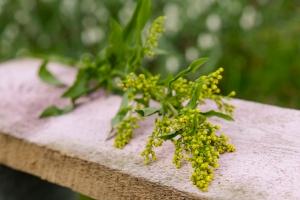 Rosen-und-Dornen-florist-blumenladen-Zinnowitz-Usedom-Chysantheme-narzisse-Tulpe-ranunkel-christrose-Nelke-flieder-annemone-rose-solidago-5