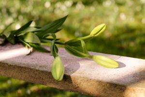Rosen-und-Dornen-florist-blumenladen-Zinnowitz-Usedom-Chysantheme-narzisse-Tulpe-ranunkel-christrose-Nelke-flieder-annemone-rose-solidago-9