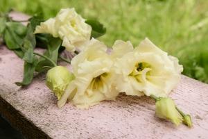 Florist-blumenladen-Zinnowitz-rosen-und-dornen- Rot-Rose-hochzeit-blumenstrauß-8