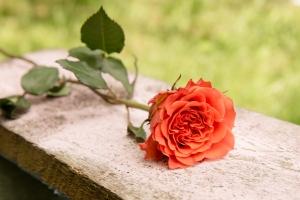Florist-blumenladen-Zinnowitz-rosen-und-dornen- Rot-Rose-hochzeit-blumenstrauß